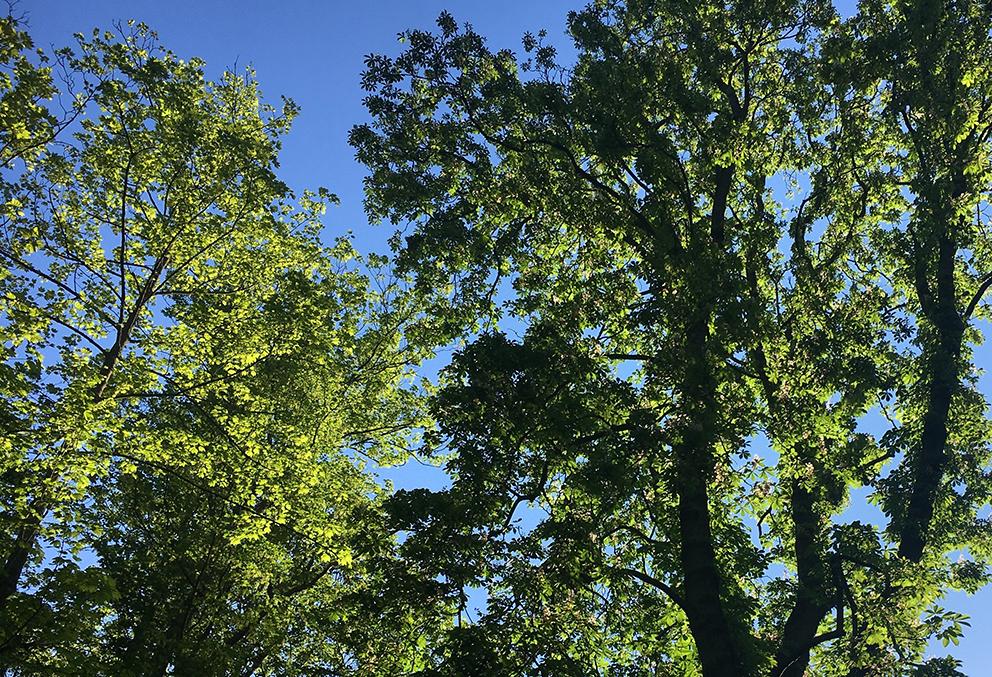 Arbres sur ciel bleu